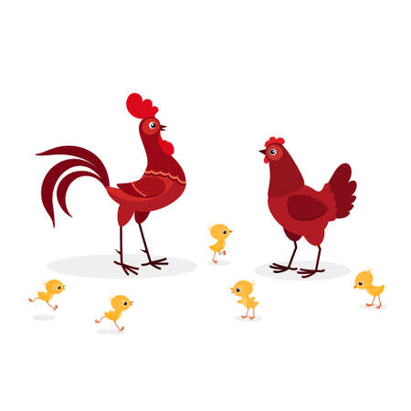 Vector illustration of red chicken family isolated on white background