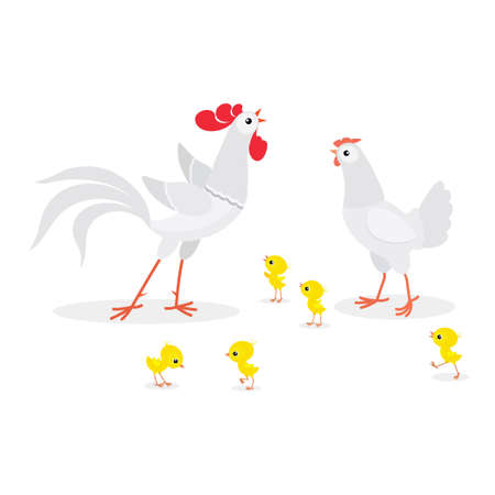 Vector illustration of white chicken family isolated on white background Illustration