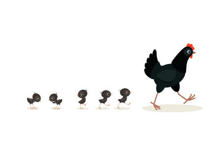 Vector illustration of walking black hen and chicks isolated on white background