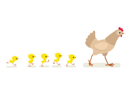 Vector illustration of walking hen and chicks isolated on white background 向量圖像