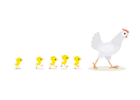 Illustration of walking red hen and chicks isolated on white background  Vector illustration of walking red hen and chicks isolated on white background Illustration