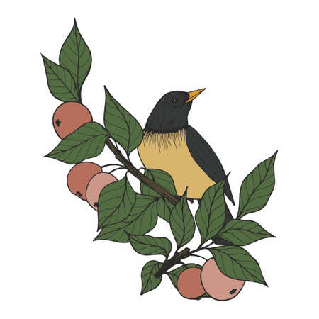Vector illustration with a bird and apple tree branches. Hand drawing