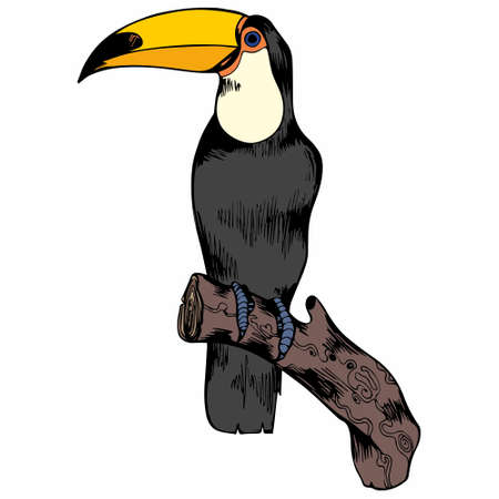 Toucan. Vector illustration. Hand drawing for design and decoration