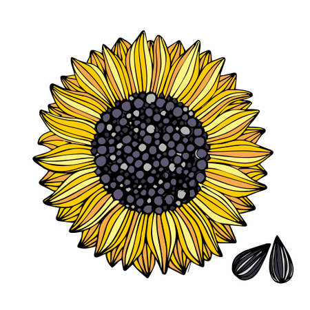 Sunflower. Vector illustration. Manual drawing for design and decoration of surfaces, packaging, textiles and other 向量圖像