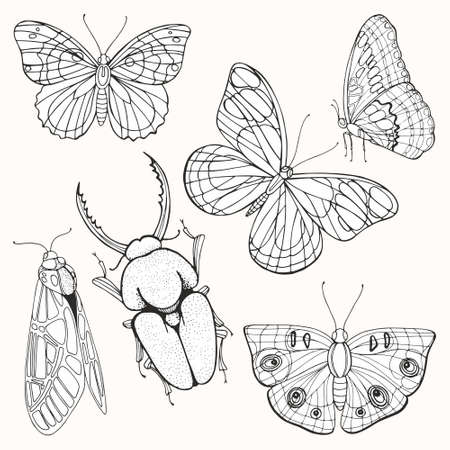 Moths, butterflies and beetles. Set of vector black and white illustrations. Hand drawing