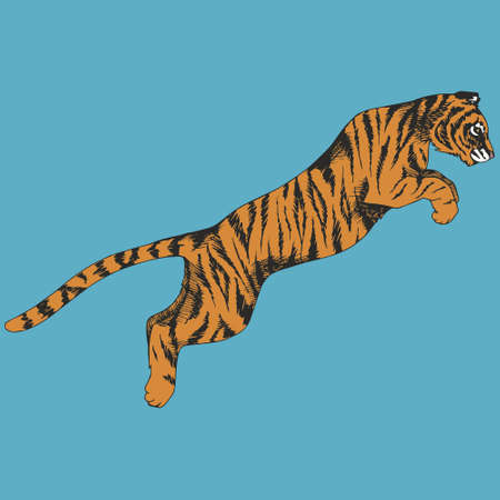 Tiger in a jump. Vector illustration. Hand drawing.