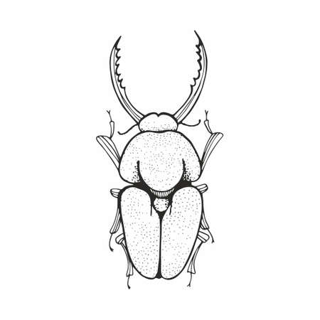 Beetle. Vector black and white sketching. Hand drawing