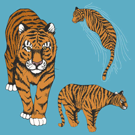Tigers. Set of vector illustrations. Hand drawing.
