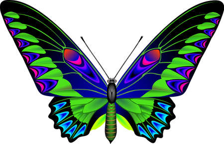 frailty: Tropical butterfly Stock Photo