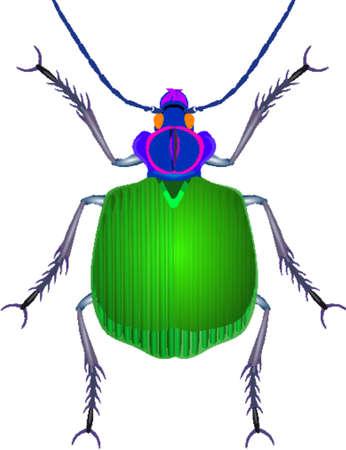 Beetle 向量圖像