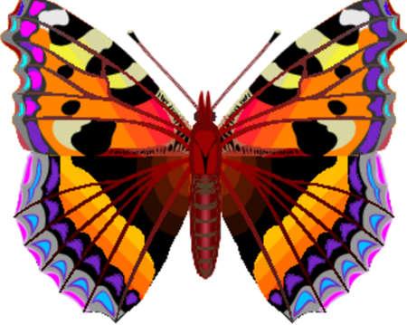 serene: Tropical butterfly Illustration
