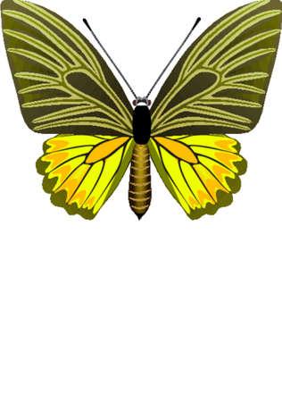 feelers: Tropical mariposa