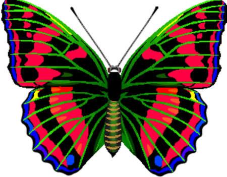 feelers: De mariposas tropicales Vectores