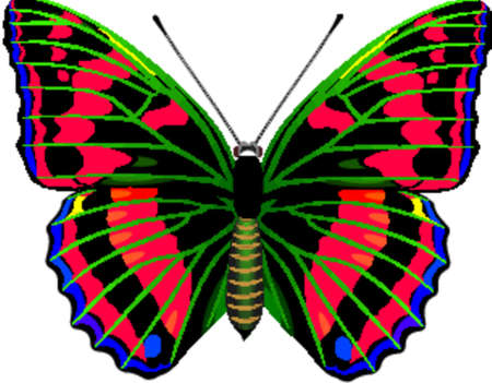 feelers: Tropical butterfly Illustration
