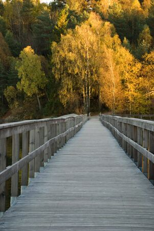 wooden path which leads over a lake to an autumn fall forest photo