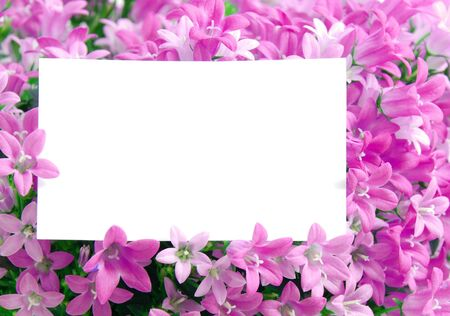 white copy space in a flower with many pink blossoms photo
