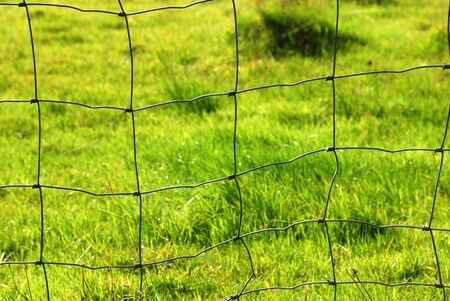 a meadow fence in front of a green meadow Stock Photo - 17368212