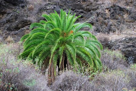 larger than life: a green palm tree in a gray and paltry environment