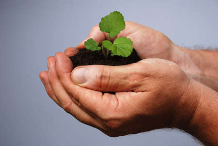 metaphorical: a male hand holds earth with a little plant in it in his hands