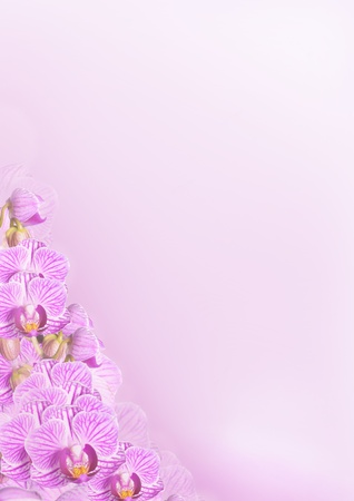 a purple background with orchid blossoms photo