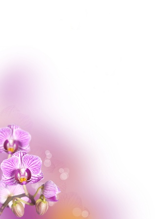 a purple orchid flower baclground in purple and orange photo
