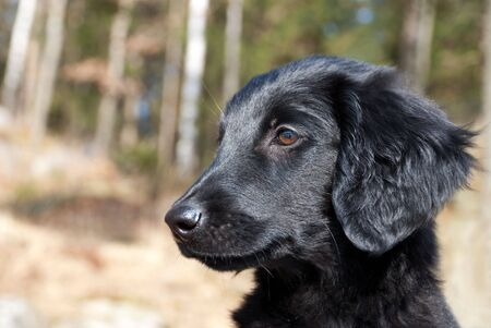 head and face of a black puppy dog photo