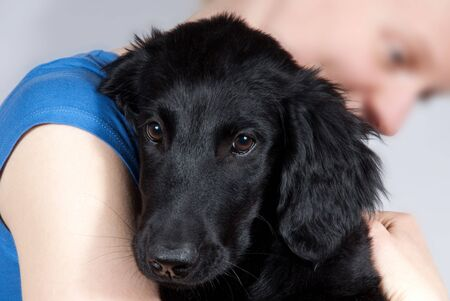 a woman holds a black dog puppy in her hands photo