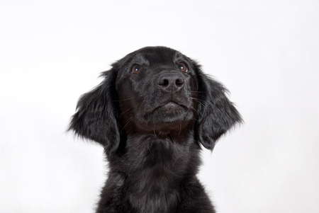 curiousness: a black puppy looking hopefully, with copyspace Stock Photo