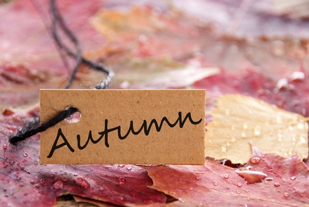 attachement: a label with autumn written on it and with autumn leaves as background