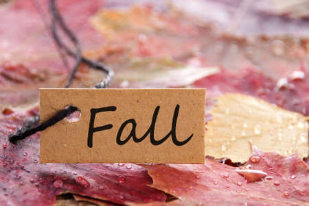 a brown label with a written Fall on it and autumn leaves in the background Stock Photo