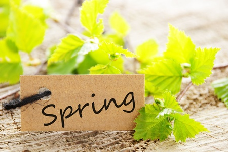 a natural looking label with green leaves and the word spring and wood as background