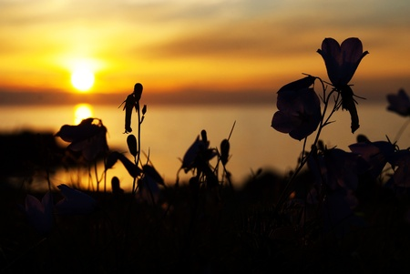 Flower Silhouettes in the Sundown Stock Photo - 21917873