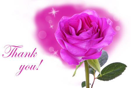 A Pink Rose with the Words Thank You as Background photo