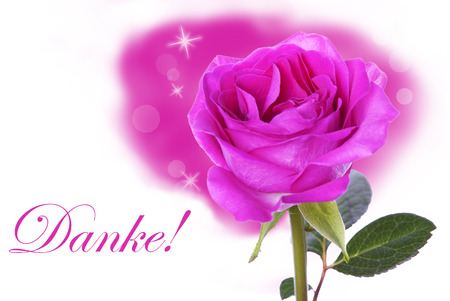 A Pink Rose with the German Word Danke which means Thanks photo