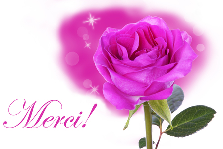 A Pink Rose with the French Word Merci Which means Thanks photo
