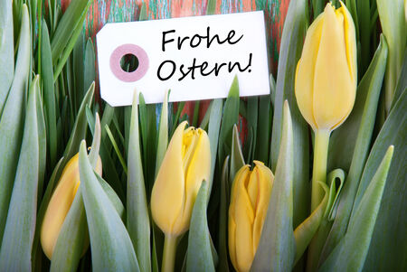 Ostern: Label with the German Words Frohe Ostern which means Happy Easter and Tulips as Easter background
