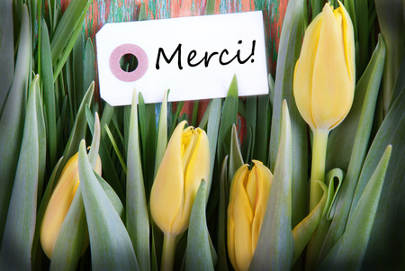 merci: Tulip Background with the French Word Merci which means Thanks