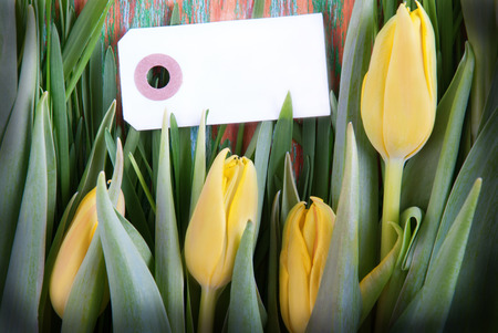 Yellow Tulips and Blank Label with Copy Space photo