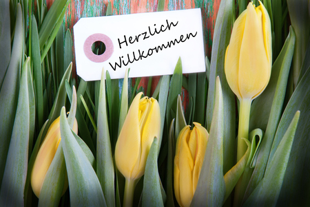 Yellow Tulip Background with the German Words Herzlich Willkommen which means Welcome photo