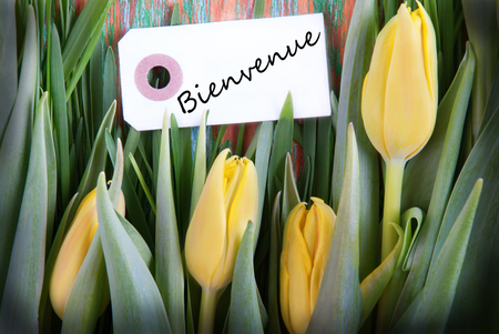 A Background with Yellow Tulips and the French Word Bienvenue, which means Welcome, on a label photo