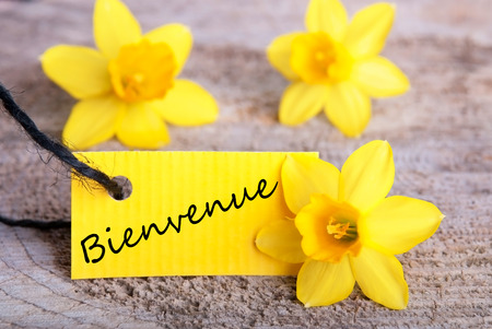 Tag With Bienvenido, yellow Spring Background with Daffodils photo