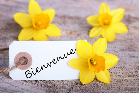 welcom: A Banner with the French Word Bienvenue which means Welcome and Narcissus Blossoms Stock Photo