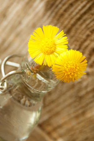 Two Yellow Flowers in a small Bottle or Vase photo
