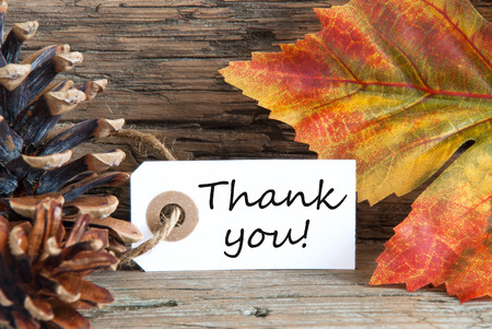 Fall Background with the Words Thank You on it photo