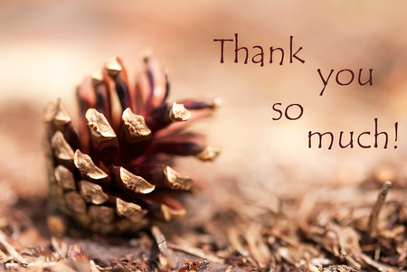 Brown Autumn Background with a Fir Cone and the Words Thank You so Much photo