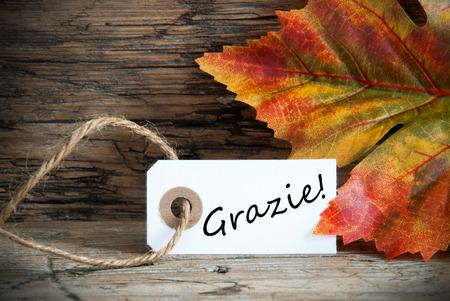caes: Una etiqueta de la caída con la Palabra Grazie italiano en él lo que significa Gracias, Fondo de otoño