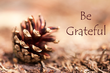 A Fir Cone in a brown Autumnal Background with the Words Be Grateful