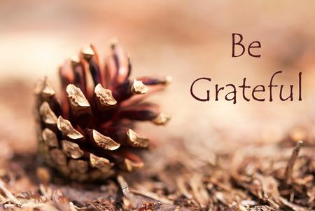 Ein Tannenzapfen in einem braunen Herbstlicher Hintergrund mit den Worten Dankbar
