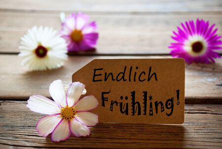 frhling: Brown Label With German Text Endlich Frühling With Purple And White Cosmea Blossoms On Wooden Background Vintage Retro Or Rustic Style