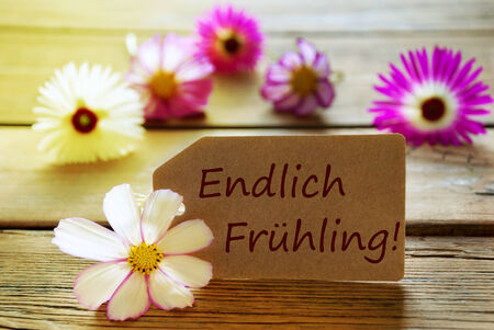 frhling: Brown Label With Sunny Yellow Effect With German Text Endlich Frühling With Purple And White Cosmea Blossoms On Wooden Background Vintage Retro Or Rustic Style Stock Photo